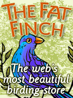 the-fat-finch-2