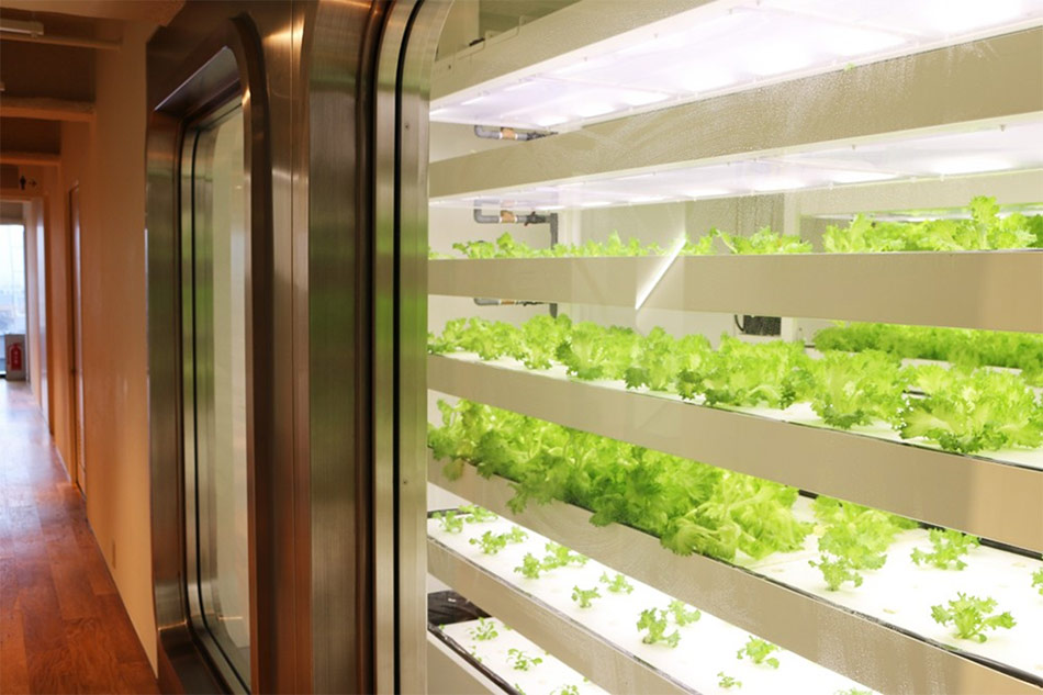 Itoya indoor organic farm